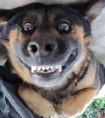 dog smiling.jpg